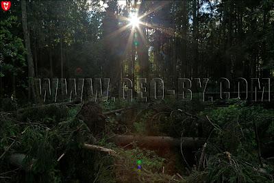 Лес в Атолино. Солнце пробивается сквозь уцелевшую чащу