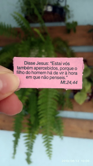 """""""O fruto do justo é uma árvore de vida; o que conquista as almas é sábio.*""""  Provérbios, 11 -"""