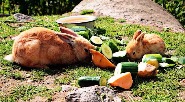 alimentacion de un conejo