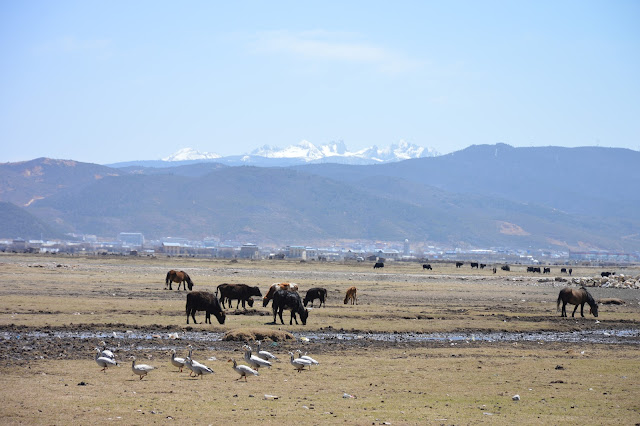 Animaux dans les plaines autour du lac Napa