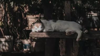Amor de gato: La anécdota de un encuentro