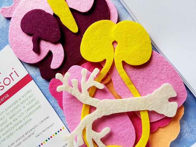 Biblioteczka Montessori. Ciało czlowieka - pedagogika Montessori - Egmont - książeczki dla dzieci - zestaw edukacyjny - zabawki edukacyjne - książki montessori  - blog rodzicielski - blog książkowy