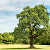 EU Stops UK from Protecting English Oaks from Imported Plant Disease
