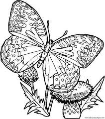 Best Ideas Coloring Sheet Butterfly Coloring Pages For Kids