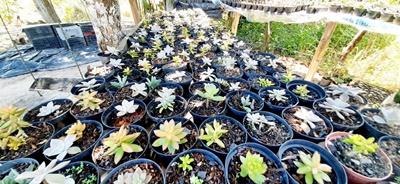 Assentamento Galiléia diversifica produção com plantas ornamentais