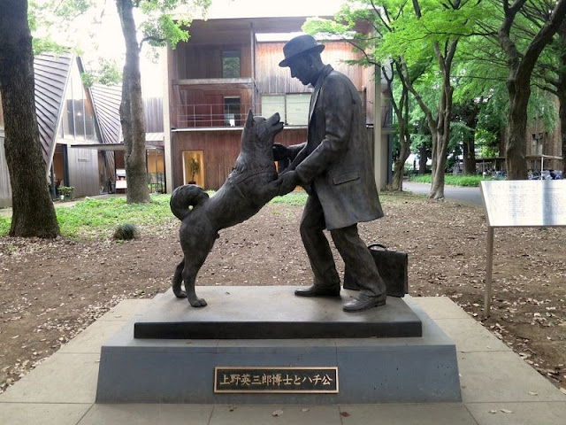 Chó Hachiko