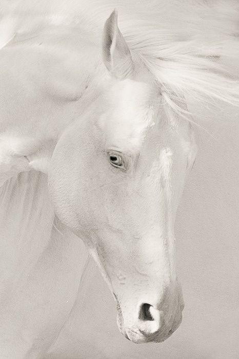 Angle Sabino White Horse