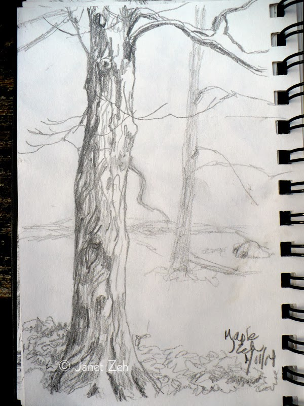 Maple tree in winter pencil sketch