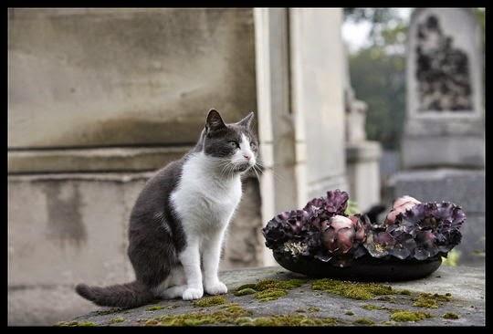 eerie cat pictures
