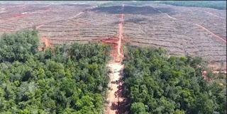 Korindo Group Dituding Sengaja Bakar Hutan Papua demi Perluas Lahan Sawit