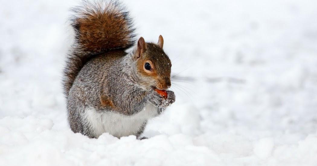 Blind Squirrel