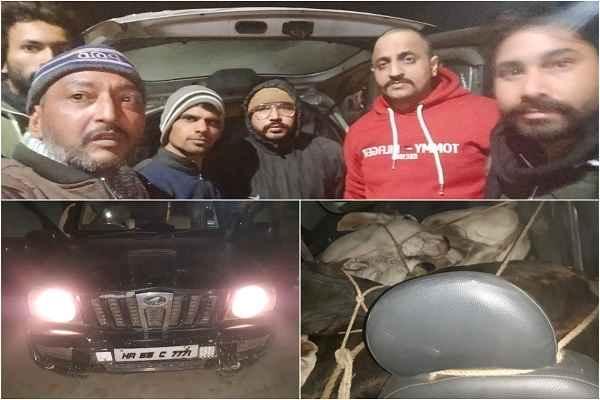 live-for-nation-gauraksha-dal-palwal-caught-scorpio-car-save-7-cow