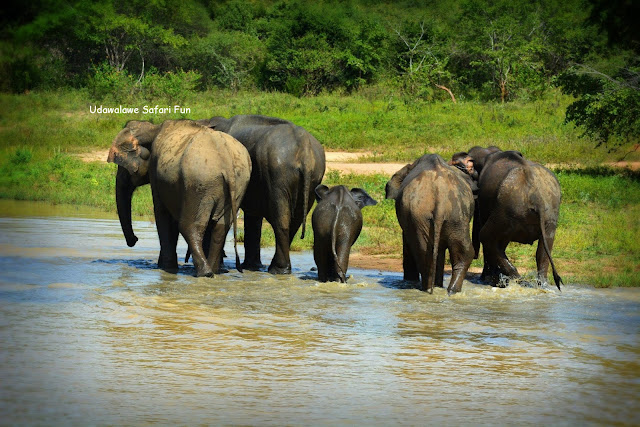 4 Hours Tours Udawalawe National Park Safari