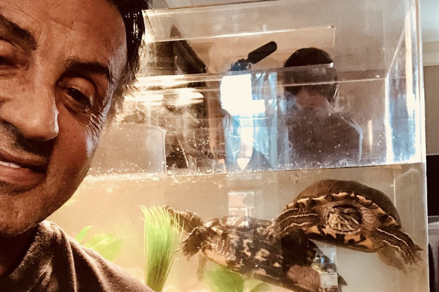 """Sylvester Stallone kept the two turtles from """"Rocky"""" — and they're now 44"""