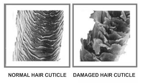 Normal versus damaged hair cuticle