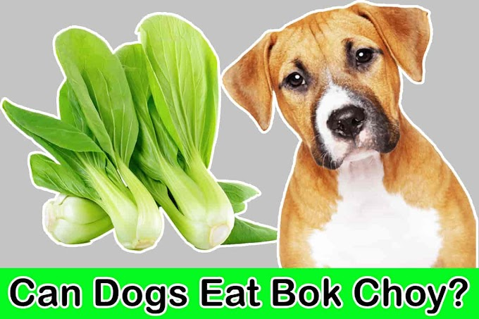 Can Dogs Eat Bok Choy | Is Bok Choy Good For Dogs