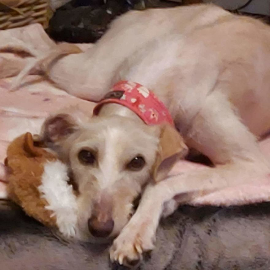 Dog Makes A Miraculous Recovery After It Was Found In The Streets On The Brink Of Death