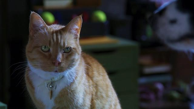 Como Perros y Gatos 3: ¡Todos a Una! 1080p latino