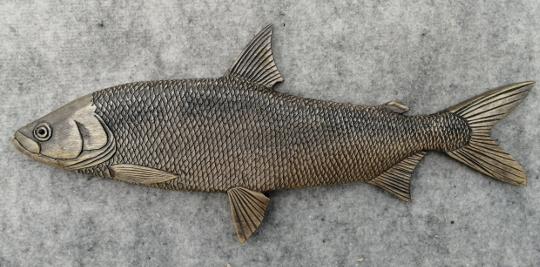 рыба сиг- пыжьян