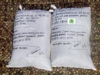 Benih padi yang dibeli   SRI JUWATI Rembang, Jateng Ke-2  (Setelah packing karung ).
