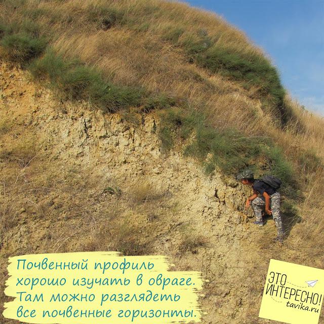 почвенный профиль и горизонты почвы для детей