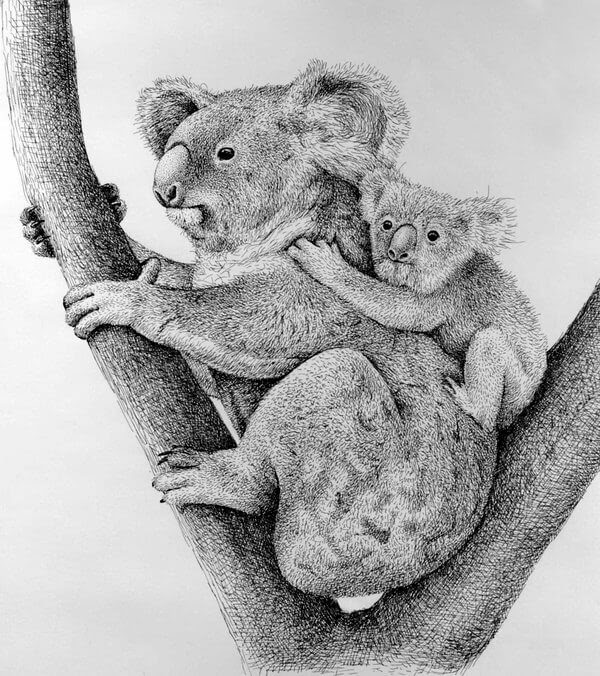 06-Mother-and-Baby-Koala-Rens-Ink-Animal-Wildlife-Pen-and-Ink-Stippling-Drawings