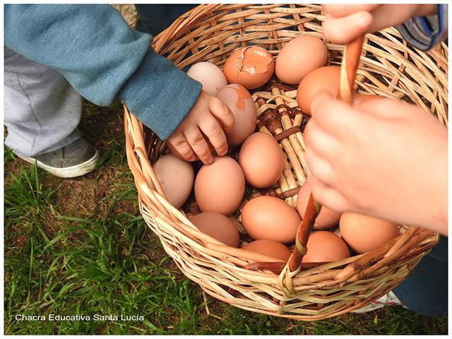 Recolectando huevos- Chacra Educativa Sta. Lucía