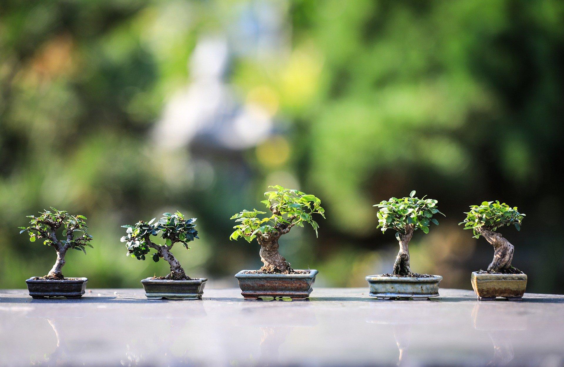 Ornamental Plants and Bonsai