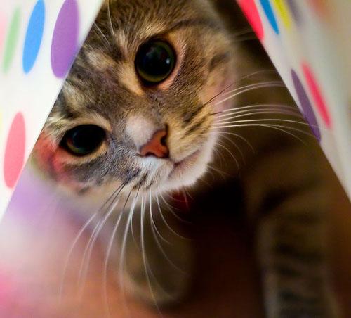 Alasan Kenapa Kucing Dipanggil Pus