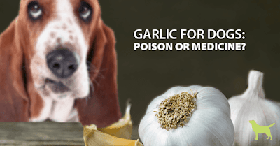 garlic_for_dogs