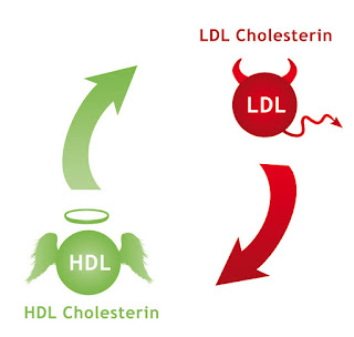 HDL - LDL @ www.personalgenomics.it