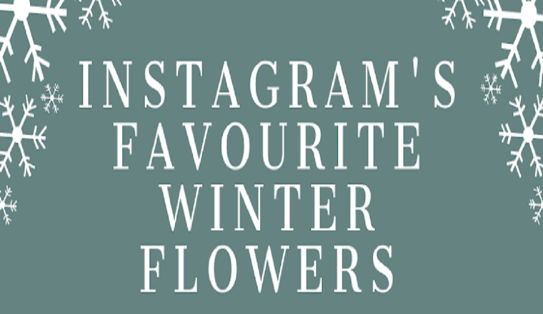 Instagram's Favourite Winter Flowers #Infographic