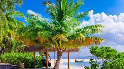 lovely-mind-natural-pretty-beach-scene