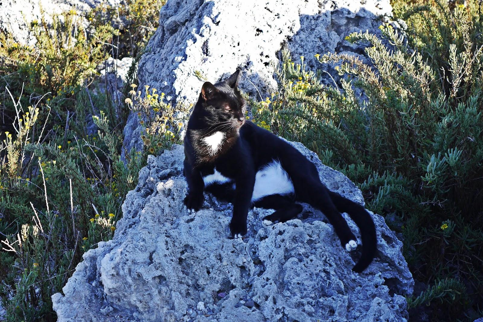 koty rodos rhodes karyn grecja  blog modowy blogerka modowa podróż poślubna