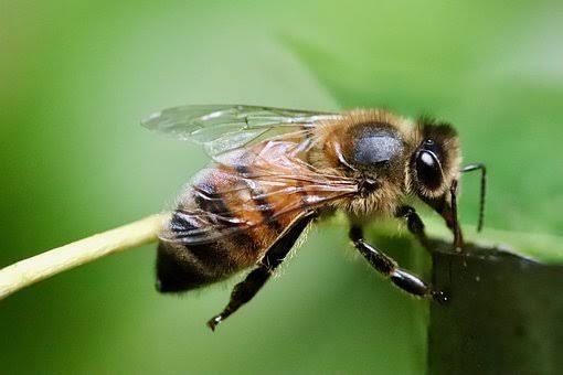 मधुमक्खियों के बारे में जानकारी चाहिए I मधुमक्खी के छत्ते का चित्र I मधुमक्खी के बारे में जानकारी