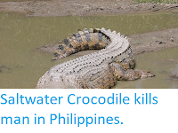 http://sciencythoughts.blogspot.co.uk/2018/02/saltwater-crocodile-kills-man-in.html