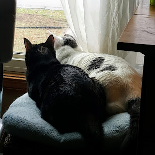 two cats snuggling watching birds outside window