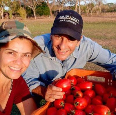 Cultivo de tomates em estufas traz vantagens para produtor rural em Rosário Oeste