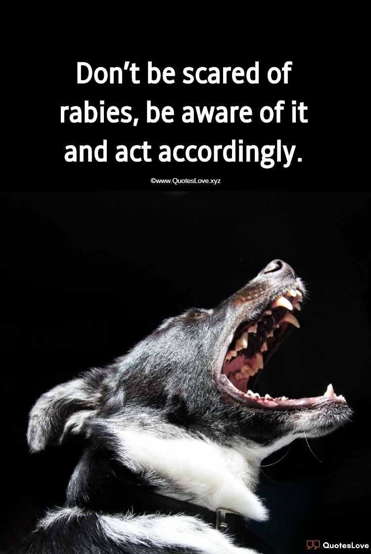 World Rabies Day Quotes, Sayings, Slogans, Wishes, Greetings, Theme, Poster, Pictures, Images, Photos