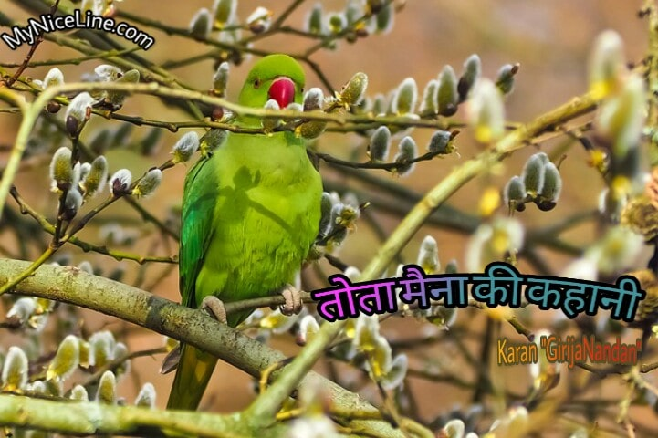 तोता मैना की प्रेरणादायक कहानी | किस्सा तोता मैना | tota maina popular short story in hindi with moral. top famous inspirational stories in hindi on parrot life