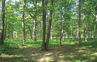 La forêt et ses mystères
