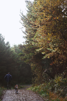 a person walking in the forest with his dog