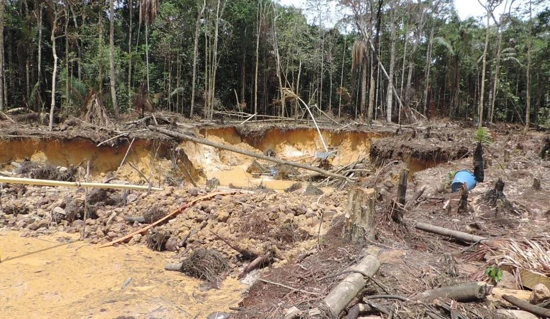 Gobernación avanza en lucha contra la deforestación en Mapiripán