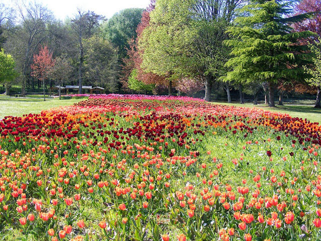 Tulips in the gardens of Chateau de Cheverny, Loir et Cher, France. Photo by Loire Valley Time Travel.