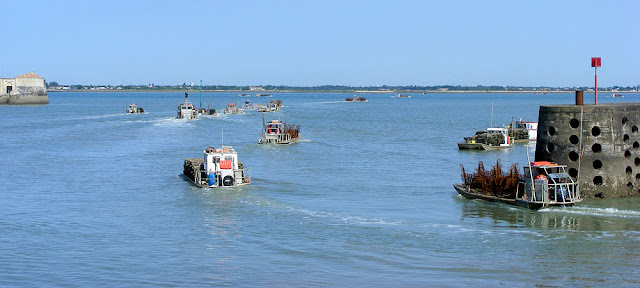 Oyster boat fleet leaves Bourcefranc-le-Chapus harbour. Charente-Maritime. France. Photo by Loire Valley Time Travel.