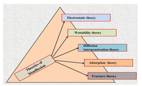 Fig. 5: Theories of bioadhesion