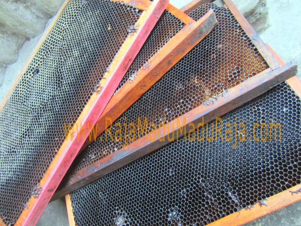 Sarang Lebah yang Sudah Gelap