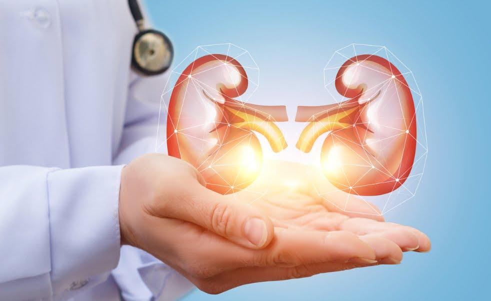 Trapianti reni e emodialisi: la soluzione con un rene bionico.