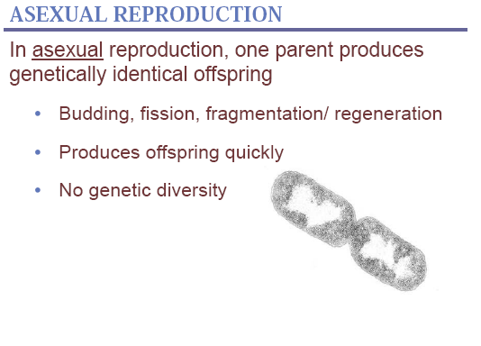 Asexual reproduction,biology for class 12