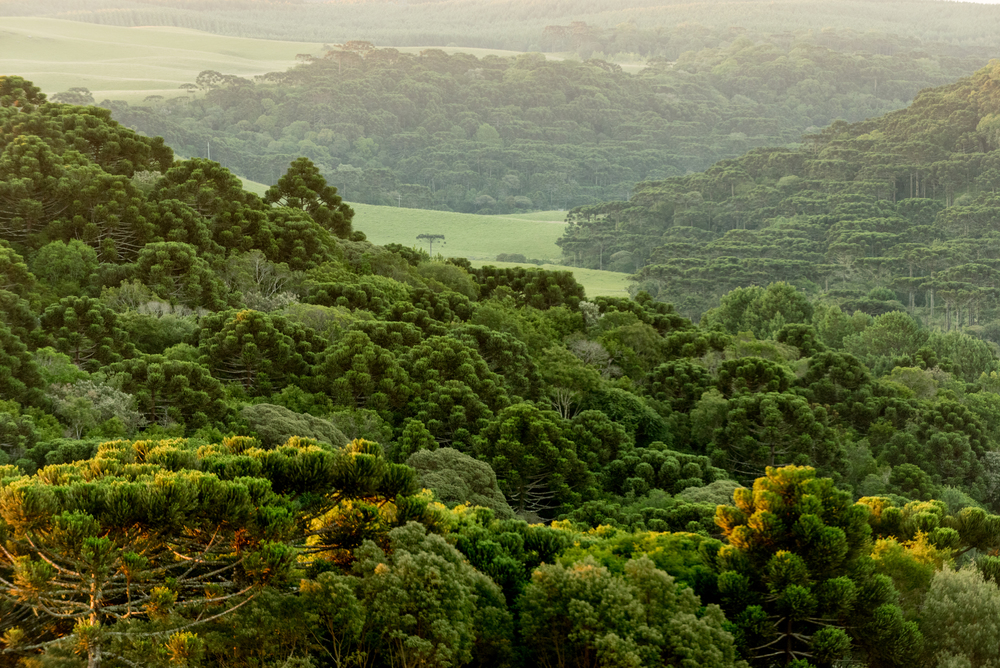 Lush-green-mountain-landscape-Brazil